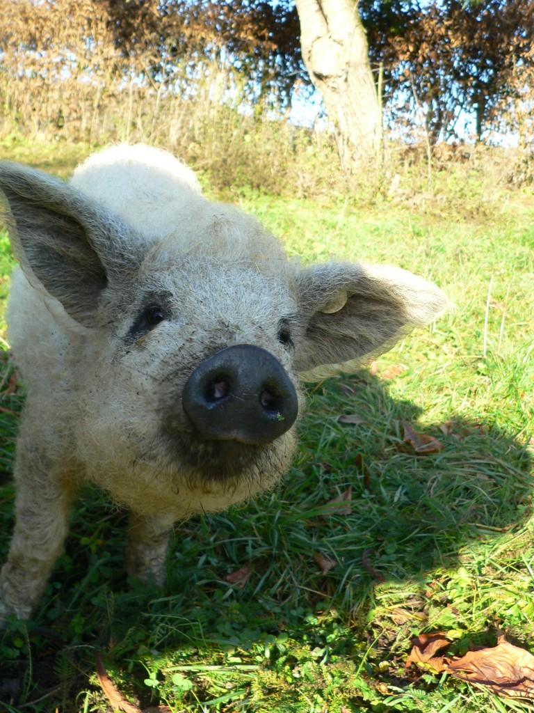 Prachtscchwein!