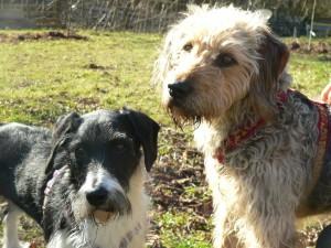 Alma und Lila