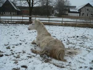 Sancho im Schnee