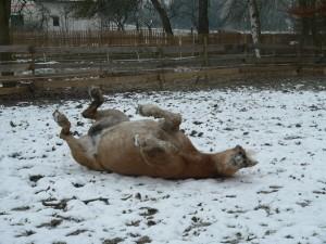 Sue im Schnee