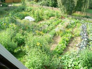 Garten von oben 2