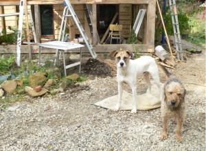 Hundis und Baustelle