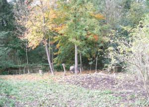 Schweinchen im Herbst