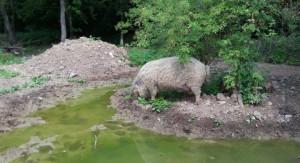 Schweineinsel