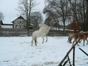 Wildpferde3
