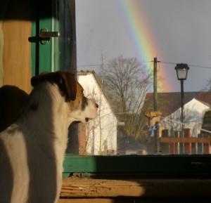 Johnny und Regenbogen