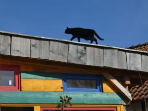 Molly auf dach